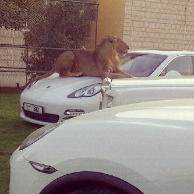 Photos The Madness Of Dubai Lazer Horse