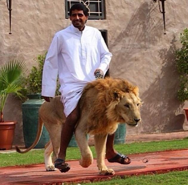Dubai Madness - Strange Pets lion