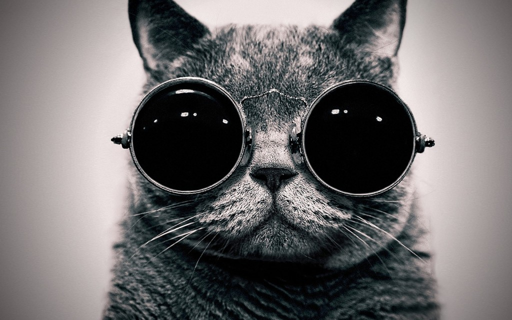 GIF cat with sunglasses