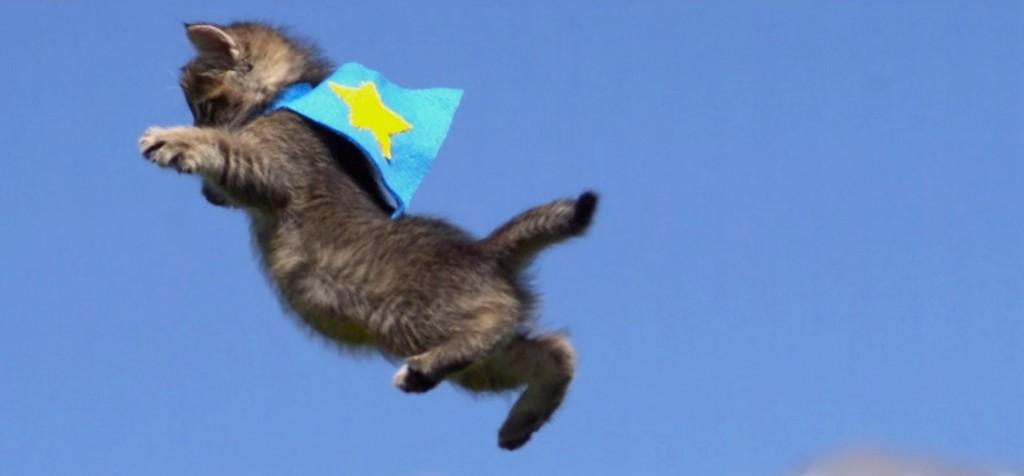GIF super cat