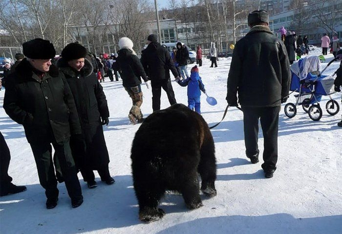 Taking a bear for a walk