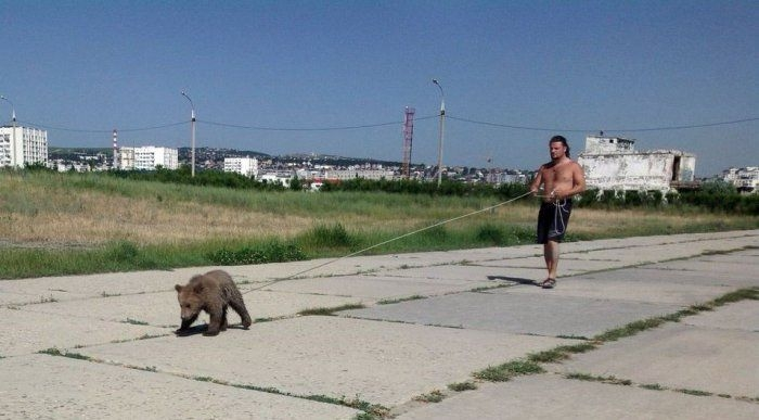 bear for a walk