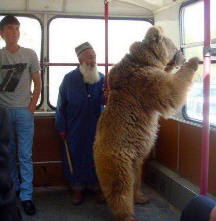 bear on a bus