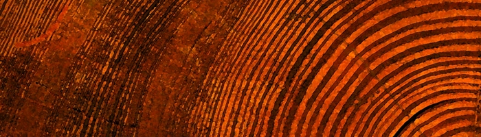 Evolution - tree rings
