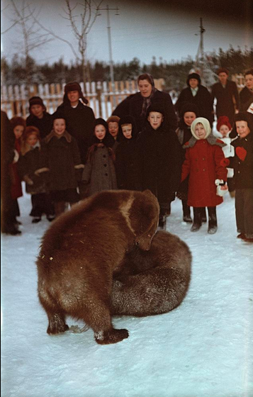 Russia With Love Bear Wrestling