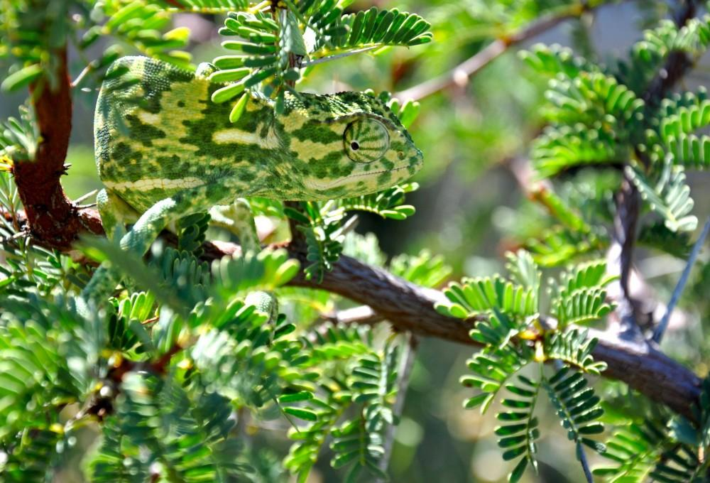 10 Wonderful Examples Of Camouflage In Nature • Lazer Horse 10 Examples Of Reptiles