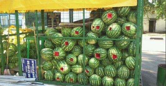 Awesome Photos From Russia With Love - water melons