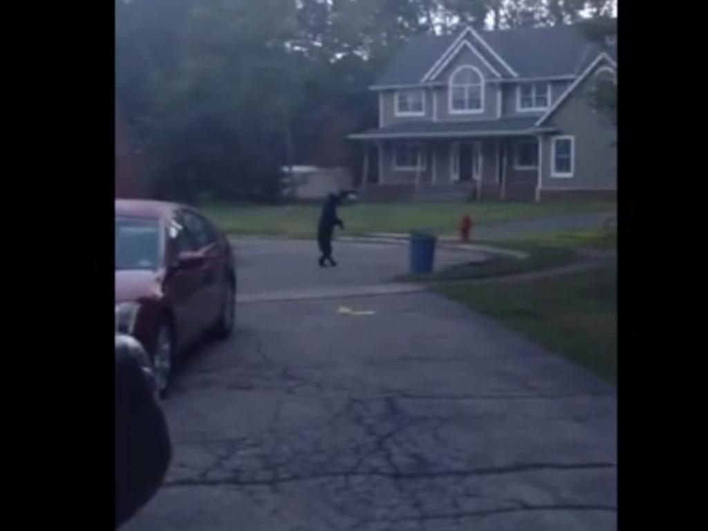 Bipedal Bear walks on two legs new jersey