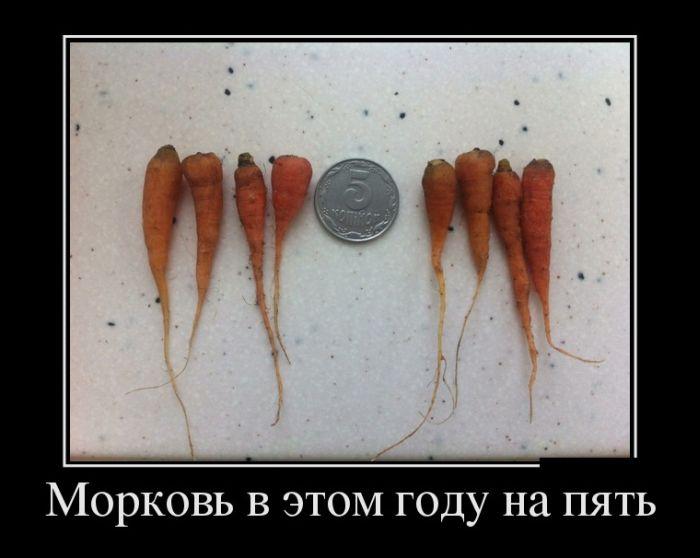 Russia With Love - rubbish carrots