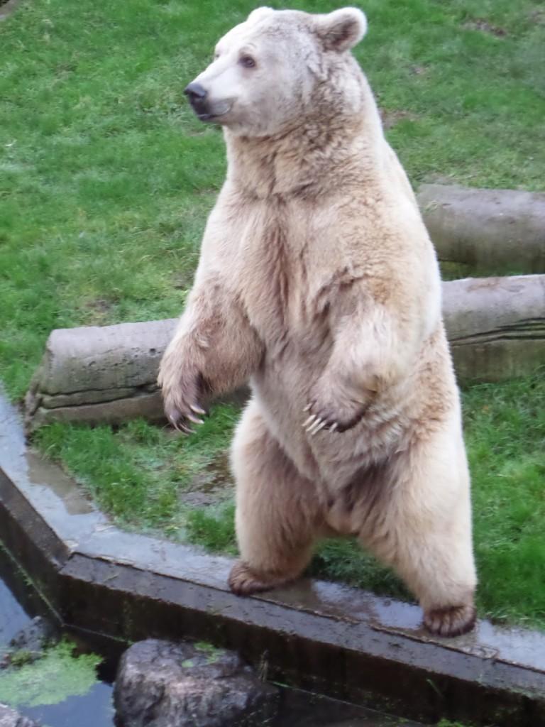 Two Legged Bear