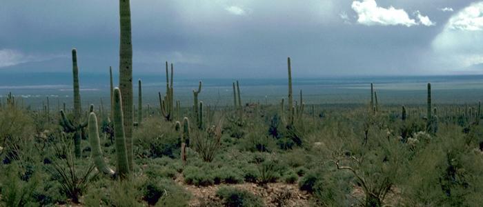 Weirdest Deaths - Saguaro Cactus