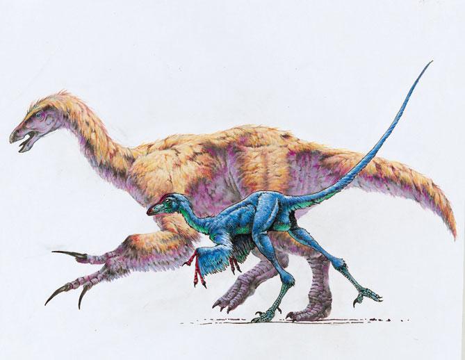 Feathered dinosaur - Beipaosaurus and Sinovenator