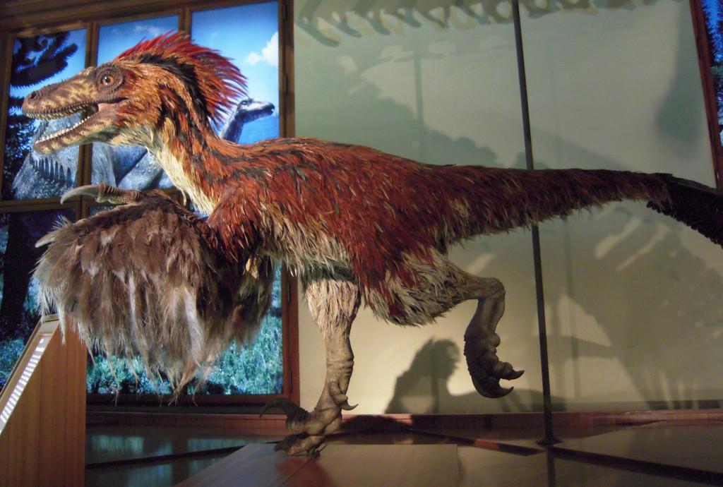 Feathered dinosaur - Deinonychus model