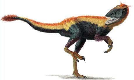 Feathered dinosaur - Dilong paradoxus