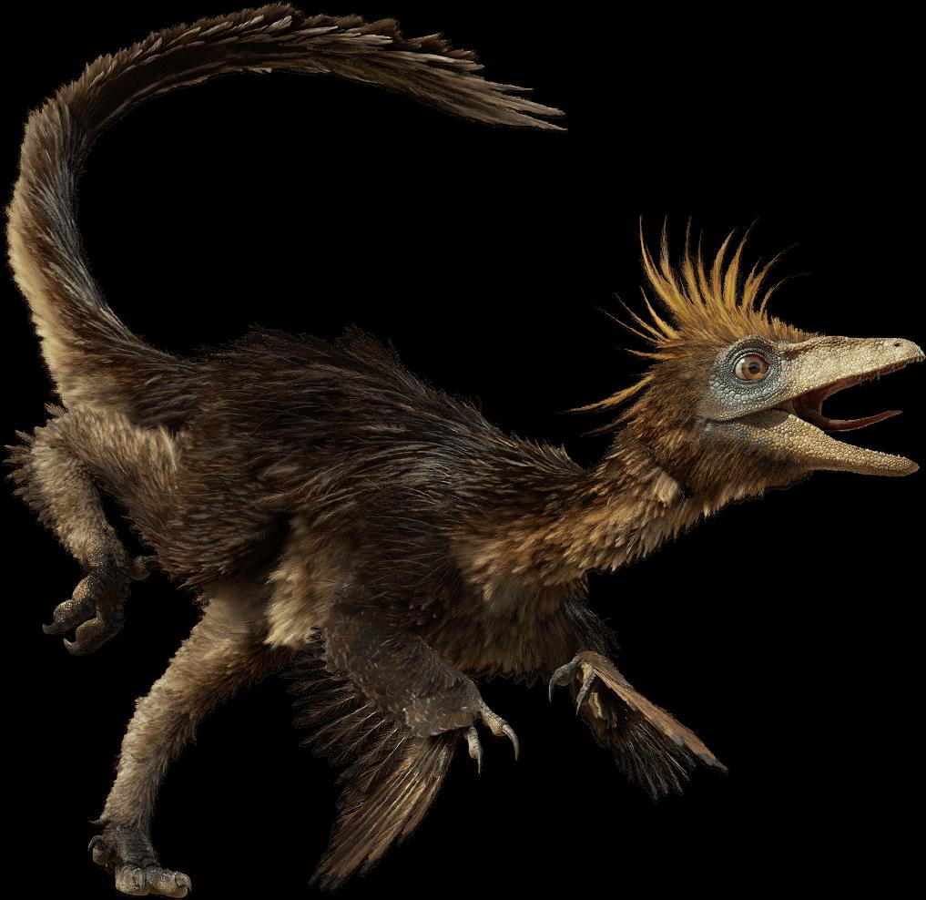 Feathered dinosaur - Troodon