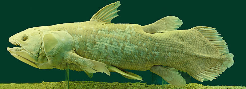 Living Fossils - Coelacanth