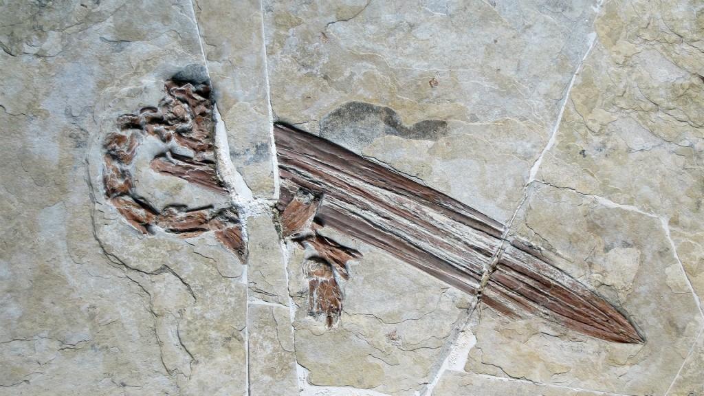Living Fossils - pelican beak