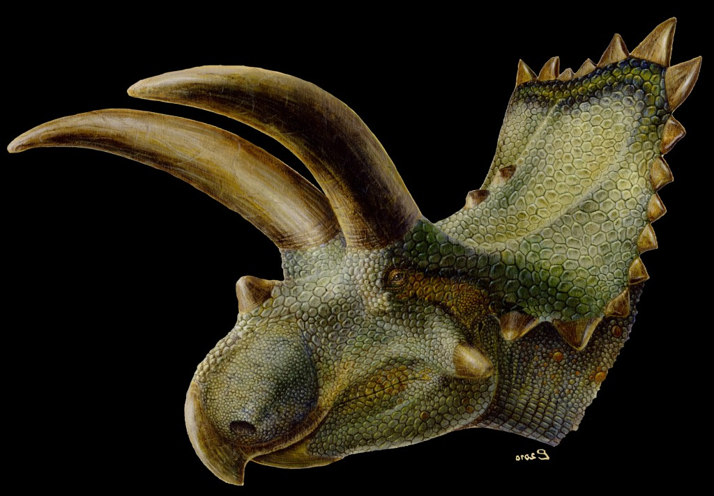 Coahuilaceratops - first horned dinosaur discovered in Mexico