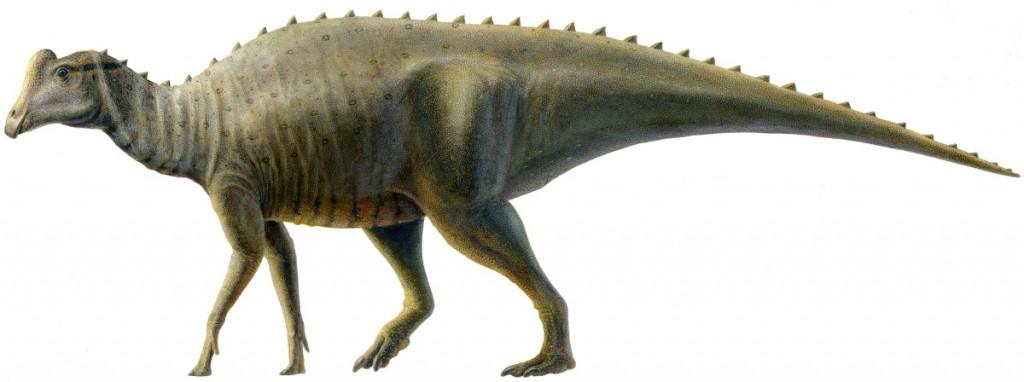 """Joe"" - a young Parasaurolophus"