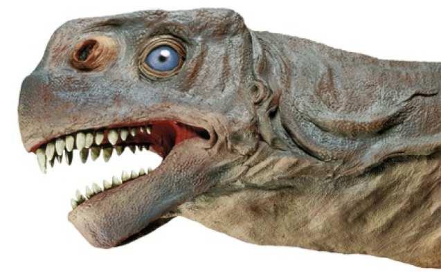 Misc - Camarasaurus head
