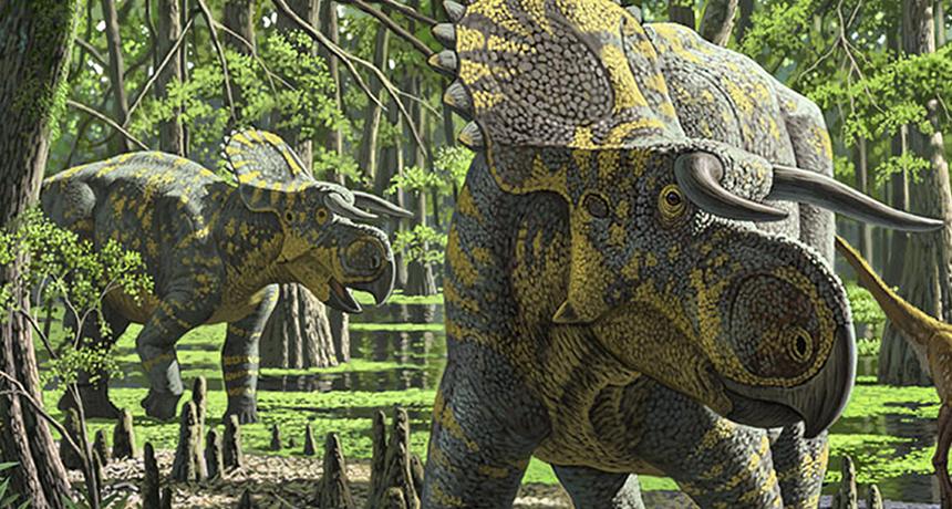 Misc - Nasutoceratops big nose