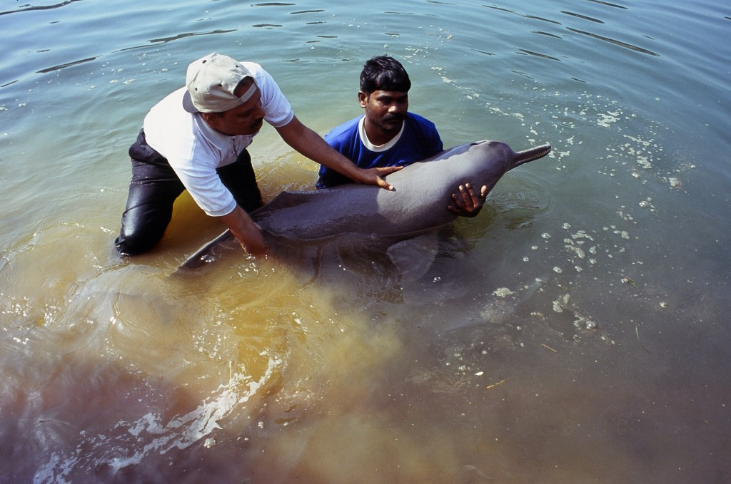 River Dolphin India - South Asian river project