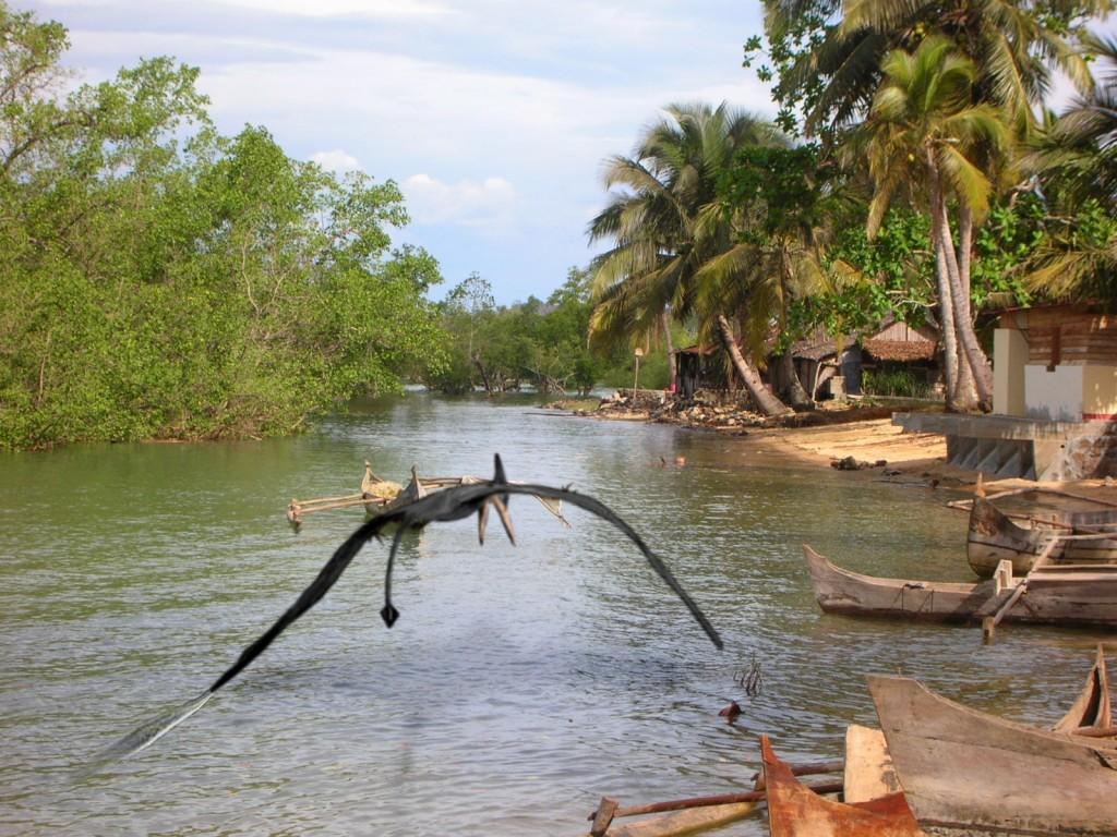 Ropen - Pterosaur Dinosaur Papa New Guinea