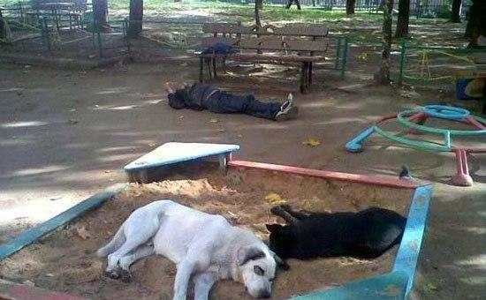 Russians having a rest with dogs