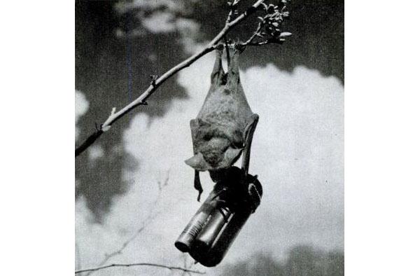 USA WWII Bat_Bomb - incendary