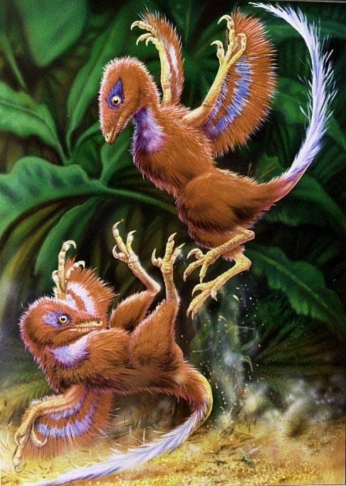 amazing proto-feathered bird