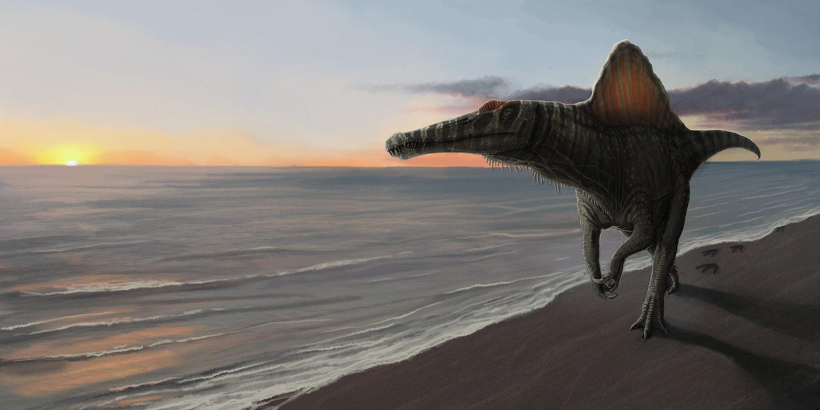 spinosaurus by FabrizioDeRossi