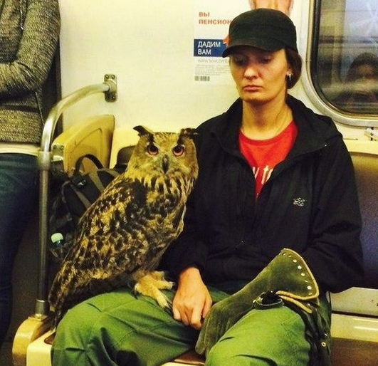 Best Russia Pictures - Eagle Owl On Train