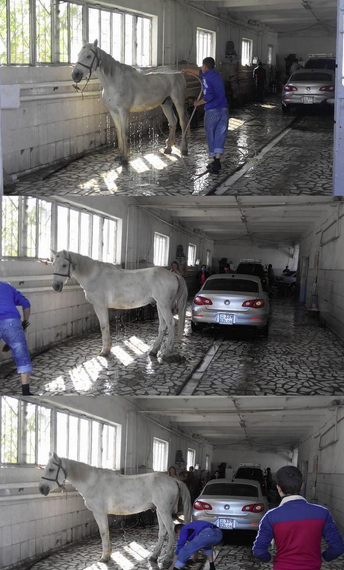 Best Russia Pictures - Horse Wash Car Wash