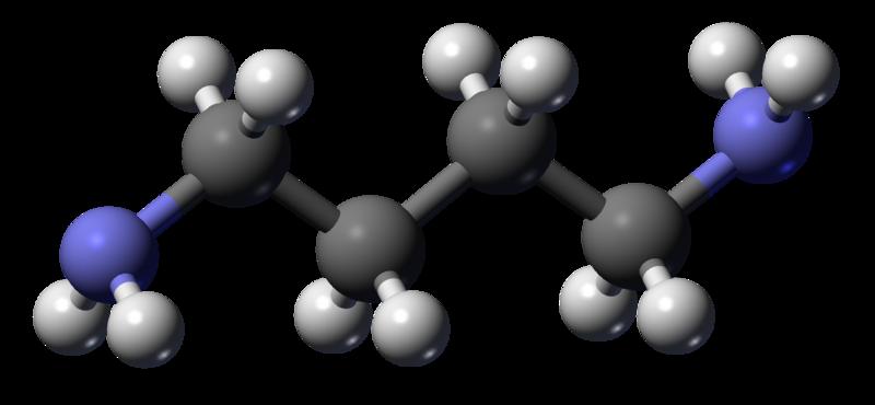 Funny Chemical Names - Cadaverine