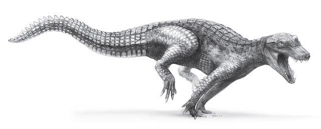 Kem Kem Beds -  Araripesuchus