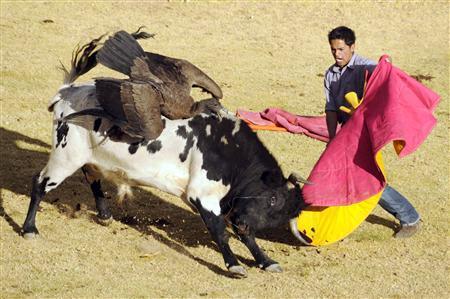 As Andean condors decline, tradition draws critics