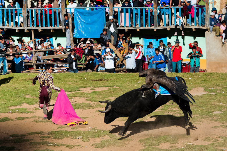 The Yawar Fiesta, a ritual fight between the condor and the bull in Peru