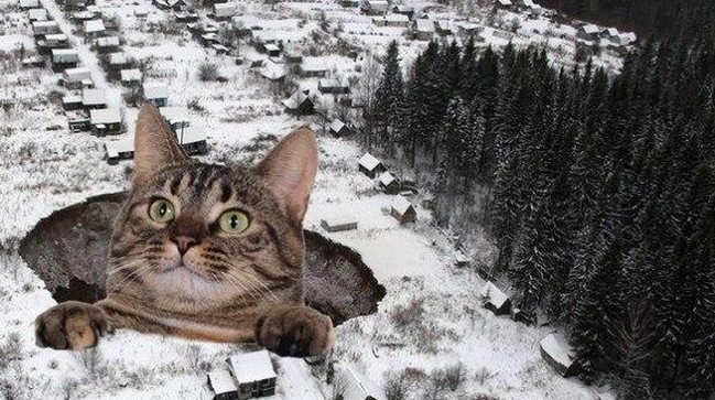 Awesome Photos From Russia With Love - Cat in Sink Hole