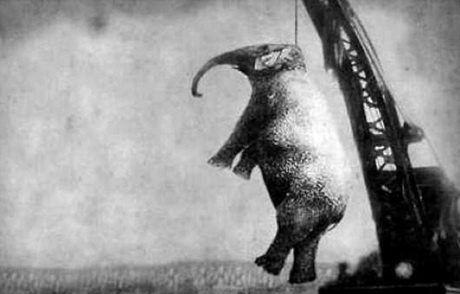 Elephants - Mary Hung for murder