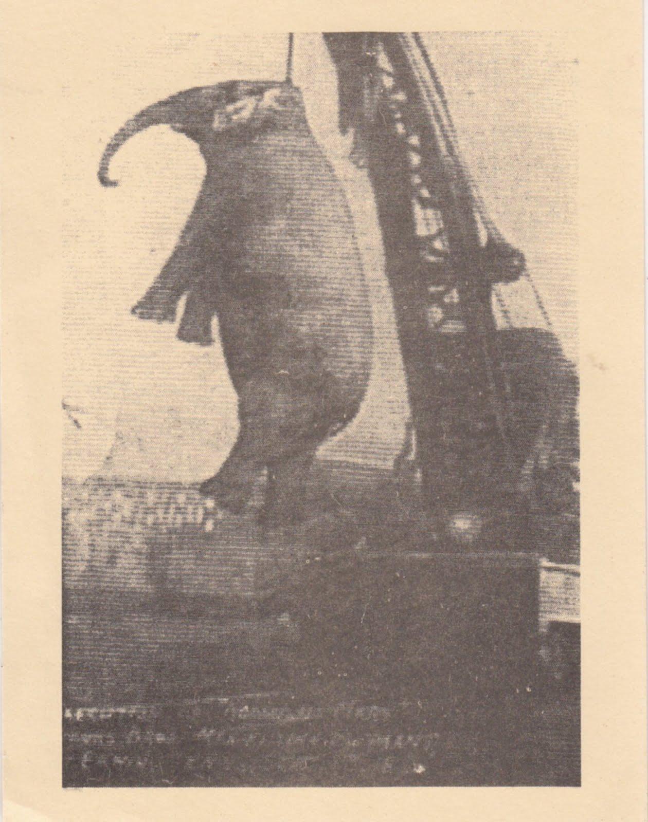 Elephants - Mary Hung
