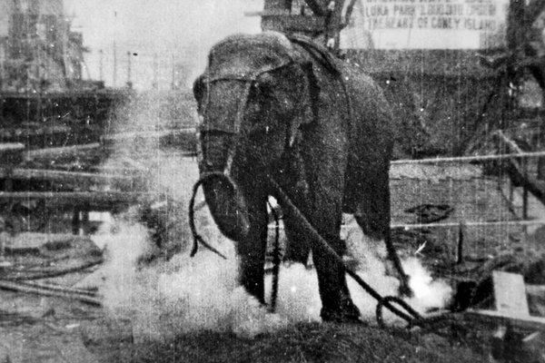 Elephants - Topsy Electroctution 2
