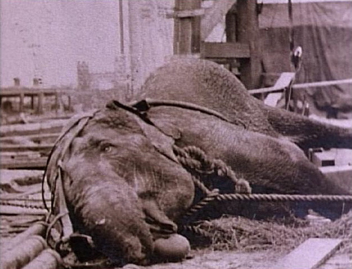 Elephants - Topsy Electroctution