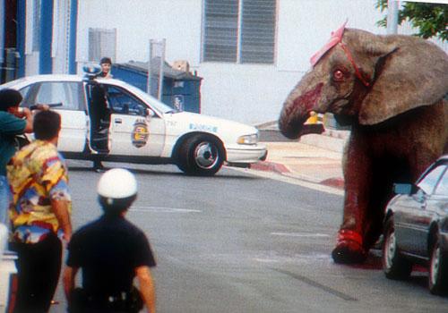 Elephants - Tyke Rampage Hawaii