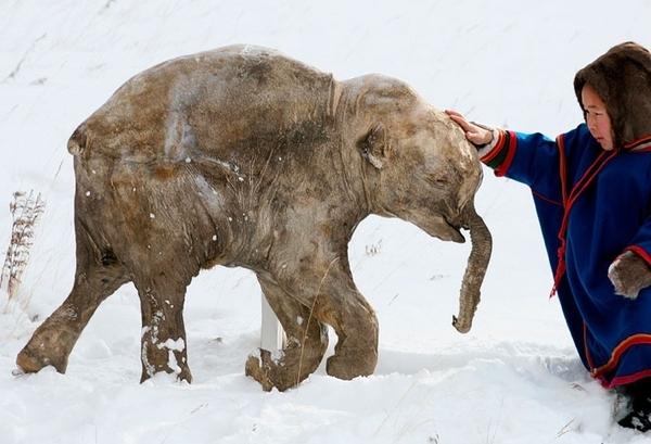 Frozen Things - Mammoth