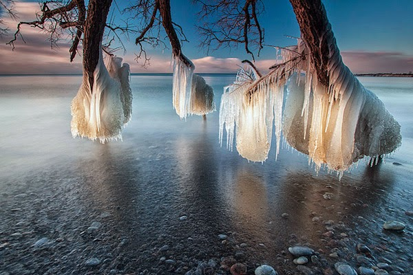 Frozen Things - Trees