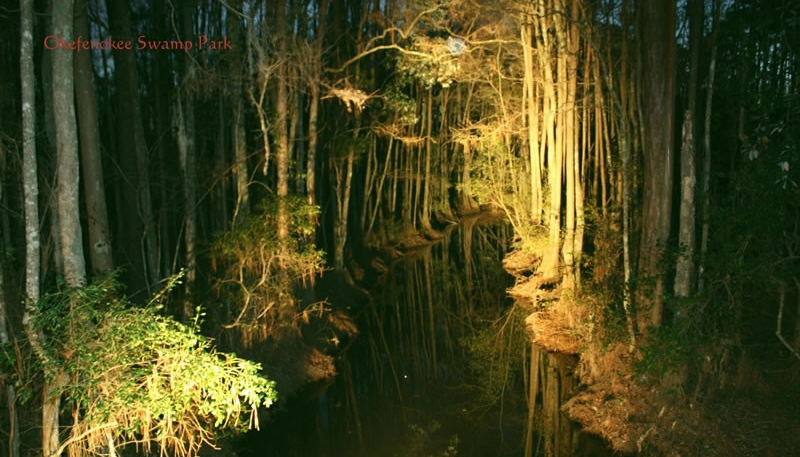 Okefenokee Swamp - By Night