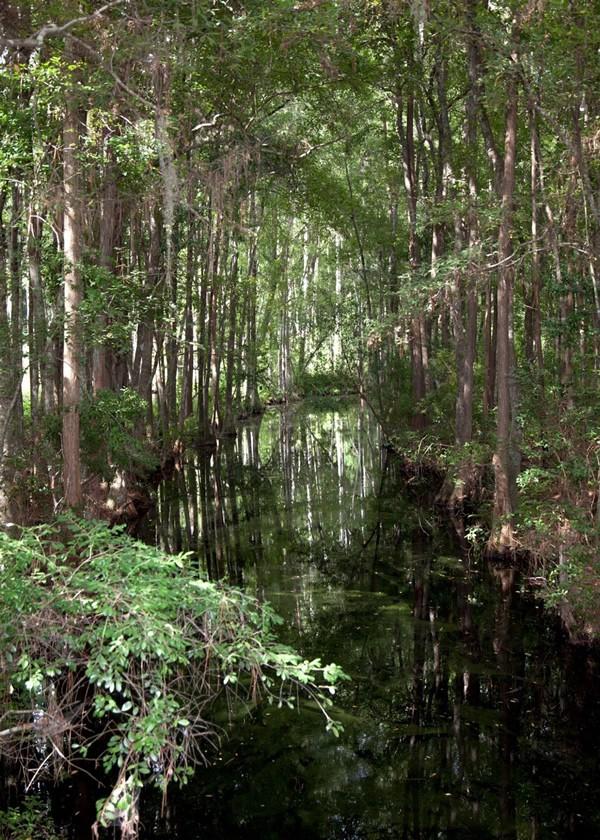 Okefenokee Swamp - Tree Lined
