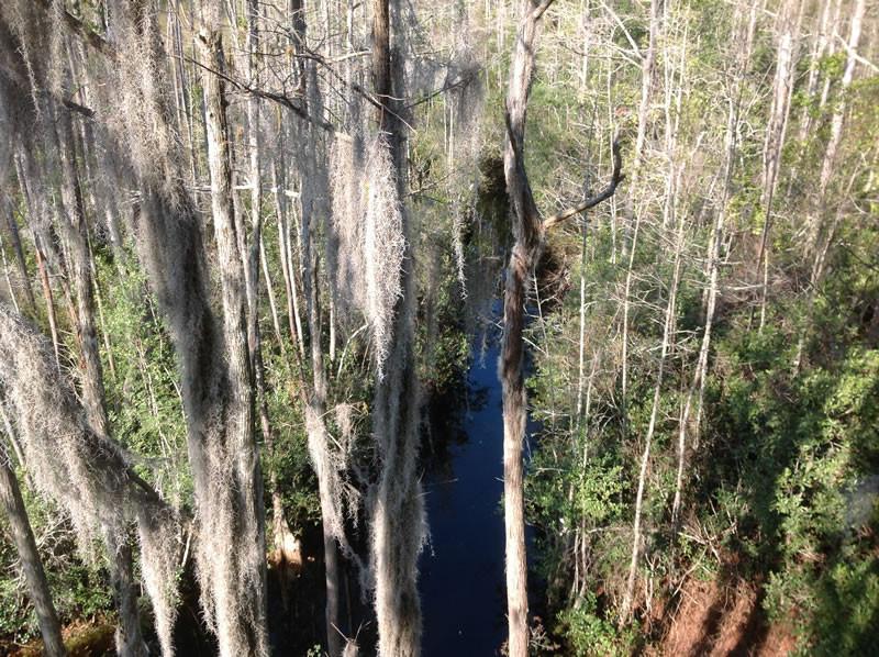 Okefenokee Swamp - Trees