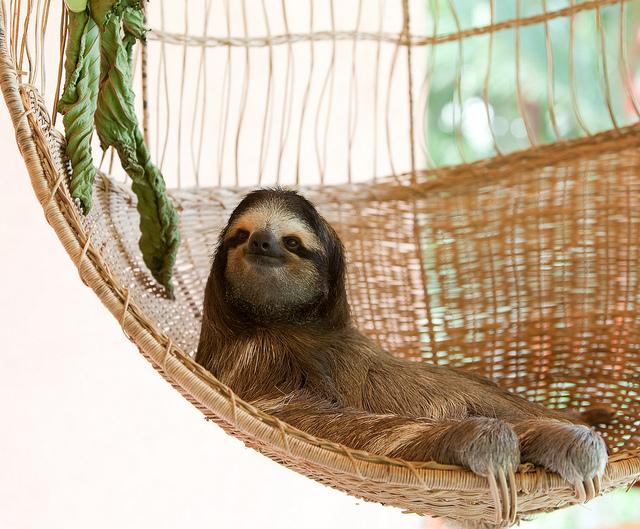 Sloth Sanctuary Costa Rica - always smiling