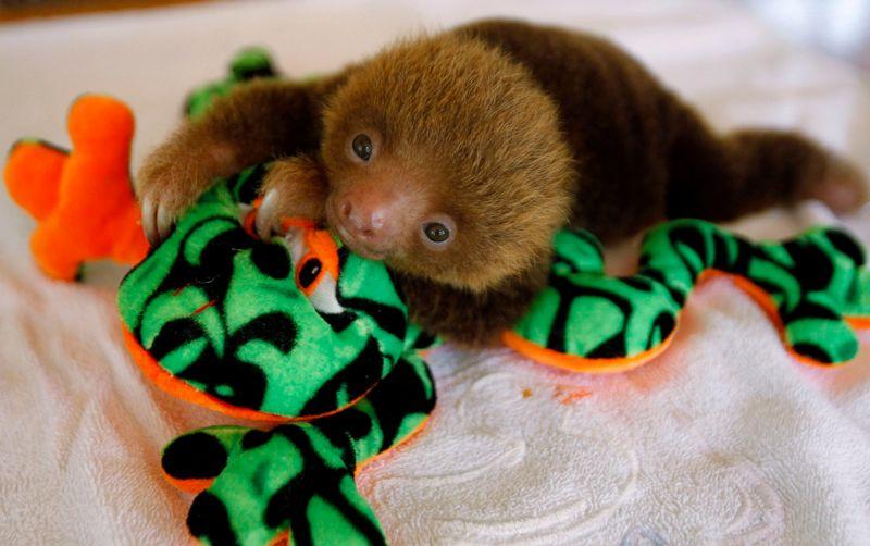 Sloth Sanctuary Costa Rica - baby